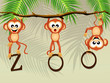 monkeys in the zoo