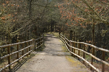 Camino bajo la sombra de los arboles en el bosque
