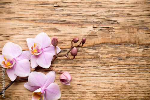 canvas print picture Orchid.
