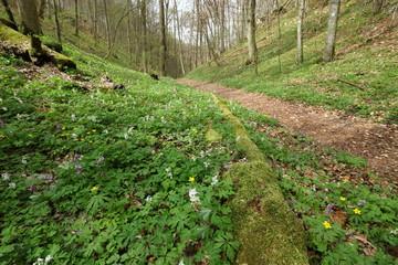 Weg/Pfad auf der Schwäbischen Alb im Frühjahr
