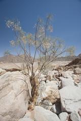 Rocky desert landscape in remote environment