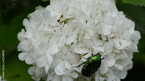 bug quietly sitting on white flower wind swings inflorescence