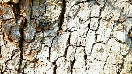 Close up of pear tree bark