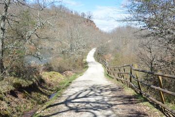 Sinuoso camino en el bosque bajo el sol de primavera