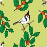 Red-whiskered bulbul bird and coffee limb wallpaper Seamless poster