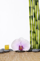 thin bamboo grove with zen stones and orchid