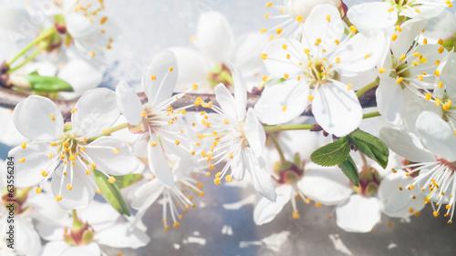Fototapeta flowers