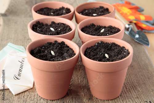 Ceramic pots with soil and seeds