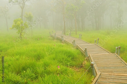 wooden bridge across a foggy forest