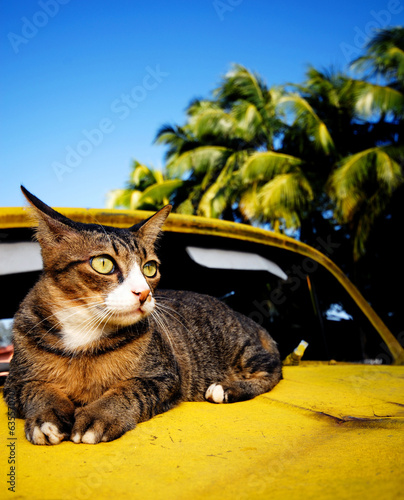 Cat Relaxing on Car
