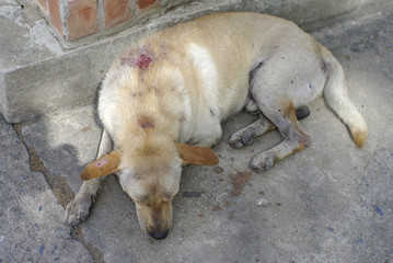 stray injured dog