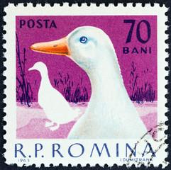 Goose (Romania 1963)