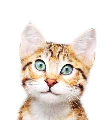 Cute kitten looking in camera