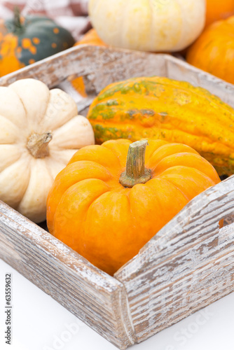 various pumpkins in a wooden tray, close-up