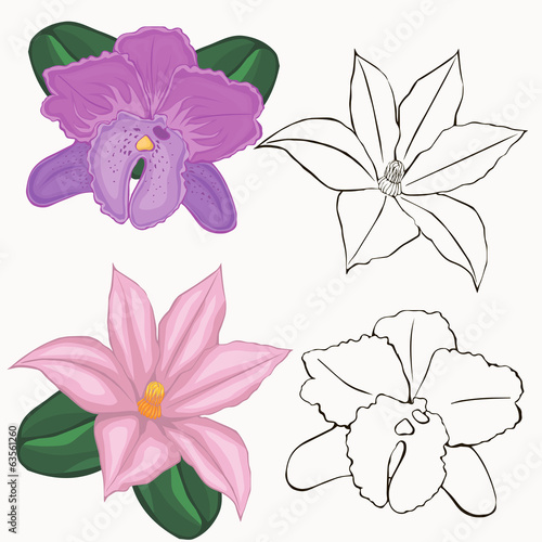 orchid flowers. contours of flowers on a white background.