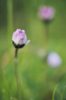 Tiny daisy in green meadow with shallow depth of field