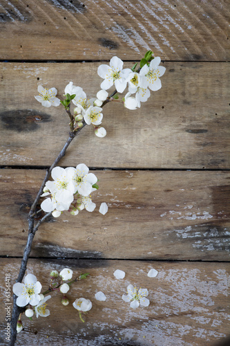 Spring branch on table