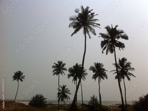 palms on the ondian beach
