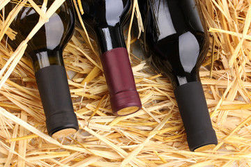 Bottles of great wine on hay