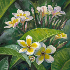 Plumeria flowers.Watercolors.