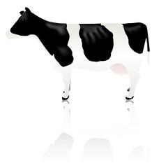 牛 動物 家畜