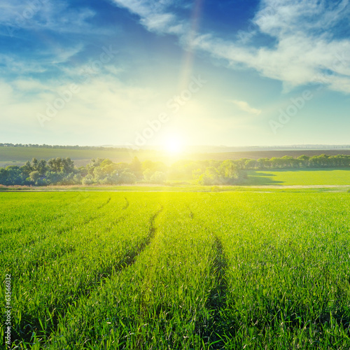 spring field and sunset