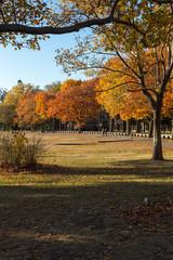 Harvard Fall Landscape