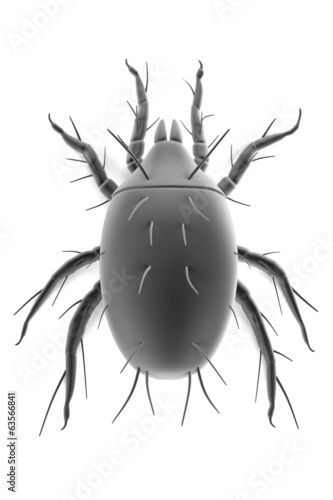 realistic 3d render of mite