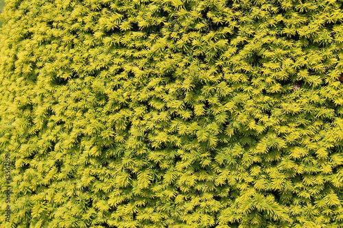 A Bright Light Green Floral Hedge Background.