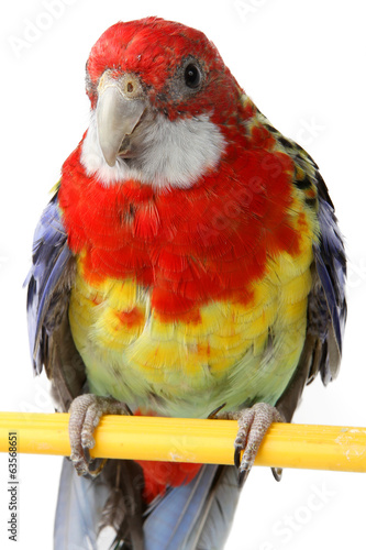 large colorful parrot