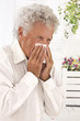 Elderly man blowing his nose and suffering from pollen allergy
