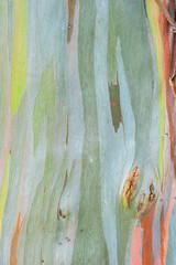 Abstract painting by eucalyptus tree bark