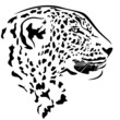 leoprad head profile design