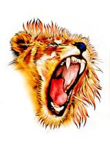 lion art illustration color