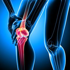 Human knee pain anatomy on blue
