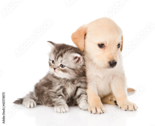 golden retriever puppy dog and tabby cat sitting together