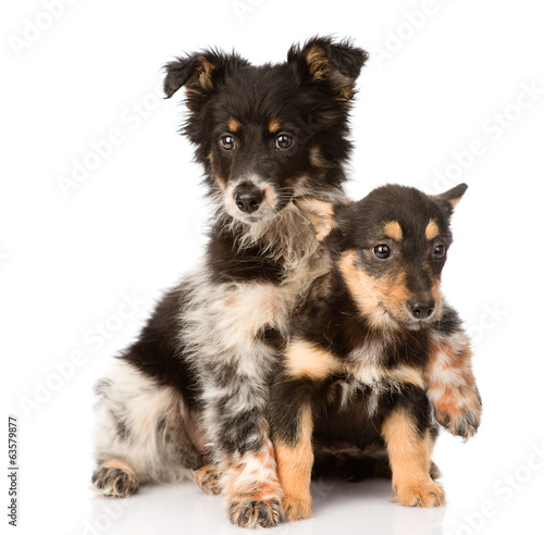 two embracing a puppy sitting in front. isolated on white