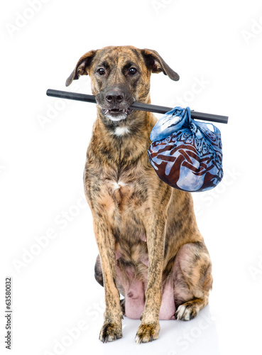 dog with a stick and a bag. isolated on white background