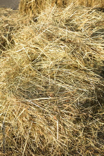 Lots of dry hay, photographed close up