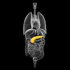 all organs x-ray of human body with highlighted biliary