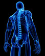 X-ray of male body posterior view - 63583639