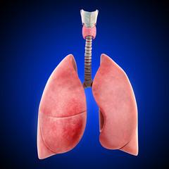 Anatomy of human lung