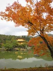 Autumn at Kinkakuji