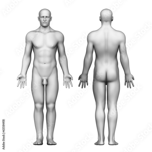 Anatomy of male body