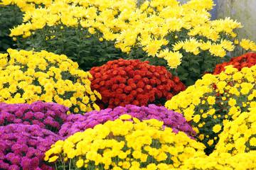 giardinaggio fioritura primaverile esposizione culture floreali