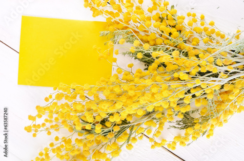 Mimosa flowers and empty card