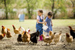 Little girl feeding chickens