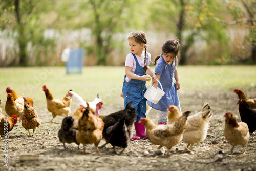 Little girl feeding chickens - 63588413