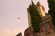Aerial Camera at Malcesine on Lake Garda
