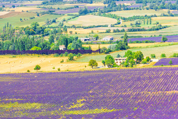 Aerial the lavender fields in Provence, France
